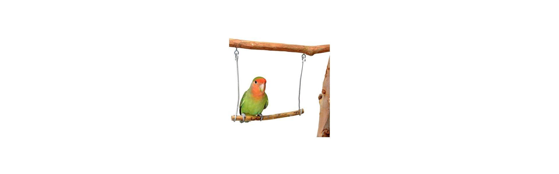 Accessoire pour cage