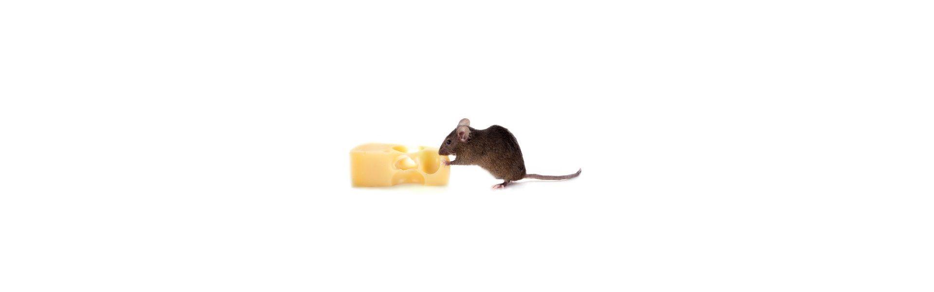 Alimentation Rat et Souris