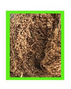Millet en grappe blanc pour oiseaux grande quantité