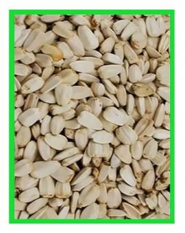 Tournesol blanc pour perroquets grande quantité