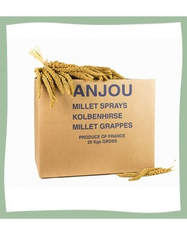 Carton millet en grappe jaune 25 Kg