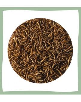 Vers de farine séchés en gros
