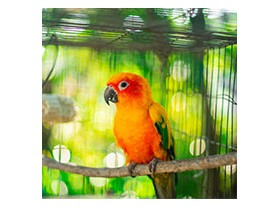 Litière pour oiseaux