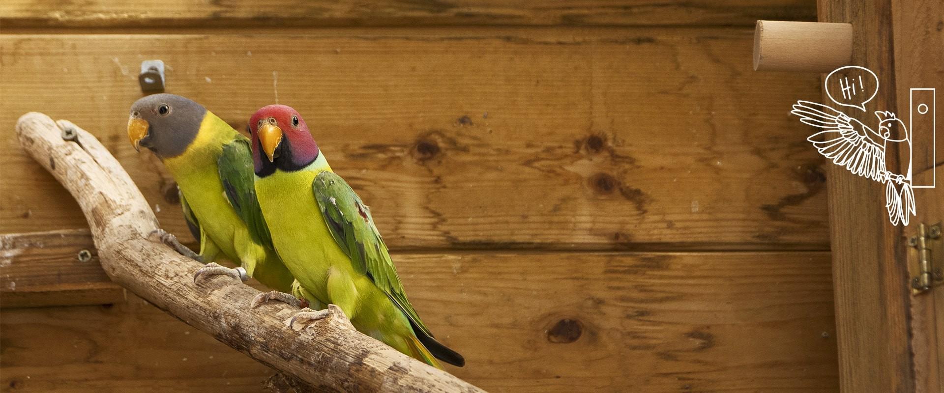 Alimentation et accessoires pour oiseaux